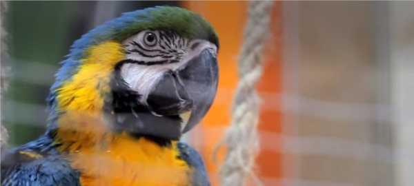 atrakcje na kaszubach Zoo Kaszuby Egzotyczne