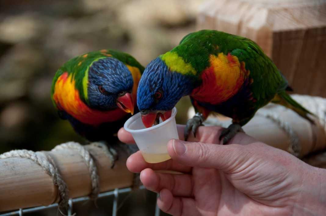 zoo egzotyczne papugarnia